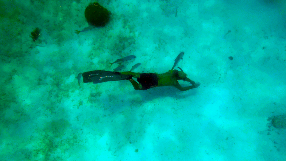 Diving in the Caribbean Sea